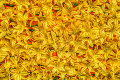Yellow artificial flowers Stock Images