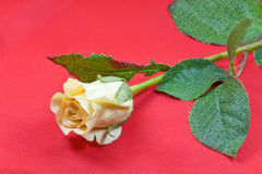 Yellow artificial rose. royalty free stock image