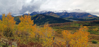 Yellow aspen glade in the Utah mountains. Stock Images