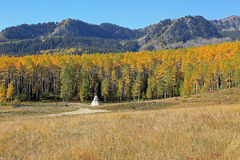 Yellow aspen glade in the Utah mountains. Stock Photography