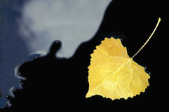 Yellow Aspen Leaf. Floating in Black Water Royalty Free Stock Image