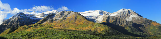 Yellow aspen panorama in the Rocky Mountains. Stock Photography