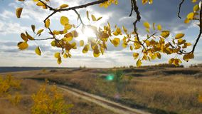 Yellow aspen road sunlight leaves against forest the blue sky background. Leaves and beautiful sun glare sun landscape. Yellow aspen road sunlight leaves against stock footage