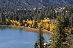 Yellow Aspen Trees on Shorelin. Bright yellow aspen trees on shoreline of mountaini lake in California's Sierra Nevada Stock Photo