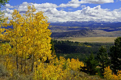 Yellow Aspens above mountain valley. Yellow Aspen trees in autumn above Jackson Hole valley Stock Photography