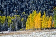 Yellow aspens in Colorado mountain Royalty Free Stock Photos