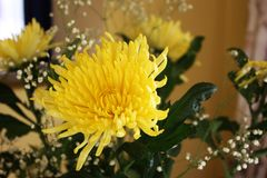 Yellow aster. Bouquet of yellow flowers Stock Images