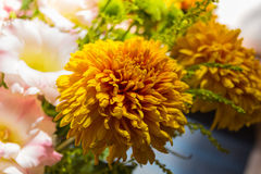 Yellow aster flowers. Aster is a genus of flowering plants in the family Asteraceae Royalty Free Stock Photos