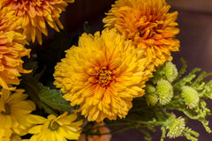Yellow aster flowers. Aster is a genus of flowering plants in the family Asteraceae Royalty Free Stock Image