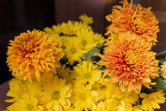 Yellow aster flowers. Aster is a genus of flowering plants in the family Asteraceae Stock Images