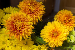 Yellow aster flowers. Aster is a genus of flowering plants in the family Asteraceae Royalty Free Stock Photography