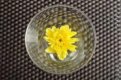 Yellow aster in a glass. A yellow aster in a glass isolated on a black background Stock Photography