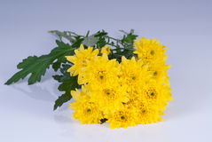 Yellow asters. A bunch of yellow asters Royalty Free Stock Photos