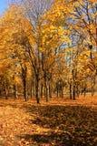 Yellow autumn stock image