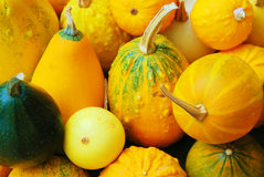 Yellow autumn. Autumn image of yellow and green pumpkins Royalty Free Stock Image