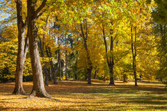 The yellow autumn on an alley Royalty Free Stock Photo