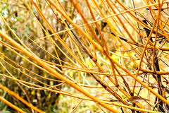 Yellow in the autumn branch with drops close-up Royalty Free Stock Photography