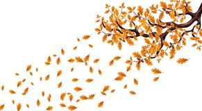 Yellow autumn branch of a large oak tree with acorns. Flying leaves. illustration. Yellow autumn branch of a large oak tree with acorns. Flying leaves. Vector stock illustration