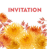 Yellow autumn chrysanthemum flower card template. golden-daisy f Royalty Free Stock Image