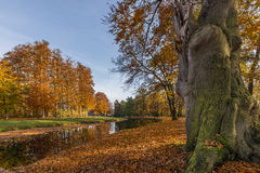 Yellow autumn colors on trees in the park Stock Photography