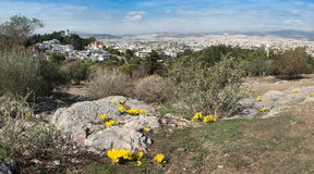 Yellow autumn crocuses on Areopagus Hill, Athens, Greece Royalty Free Stock Photography