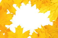 Yellow autumn fall leaf frame background Royalty Free Stock Photography