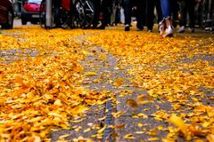 Yellow Autumn Fall Leaves Piled on Street SIdewalk Urban Environ Stock Photography