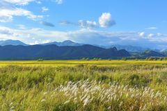 Yellow autumn field with grasses, blue mountains and blue sky wi stock images