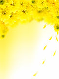 Yellow autumn flowers Royalty Free Stock Photography