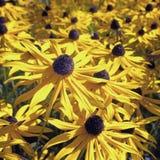 Yellow autumn flowers Stock Photo