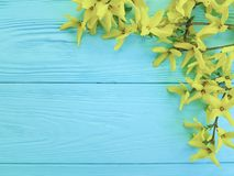 Yellow autumn flowers natural season on a blue wooden background. Yellow autumn flowers a blue wooden background season natural Stock Photo