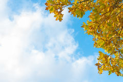 Yellow autumn foliage in front of blue sky and white clouds Stock Photo