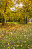 Yellow Autumn. Foliage in the autumn park Kadriorg,Tallinn City,Estonia Stock Photography
