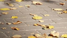 Yellow autumn foliage on the paving stones. stock footage