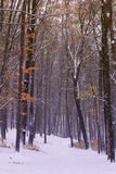 Yellow autumn forest is covered with the first snow Stock Photo