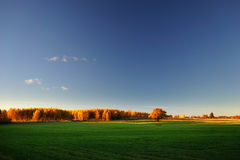 Yellow autumn forest at the green field and blue sky Royalty Free Stock Photos