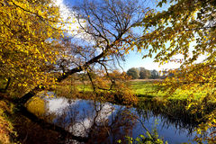 Yellow autumn in forest over river stock photo