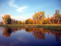 Yellow autumn forest reflected in the river Royalty Free Stock Photo