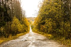 Yellow autumn forest trees and road. Yellow autumn forest trees and  road Royalty Free Stock Photo