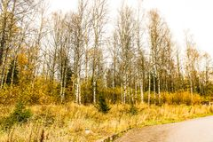 Yellow autumn forest trees and road. Yellow autumn forest trees and  road Stock Photo