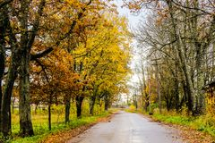 Yellow autumn forest trees and road.  Stock Photo