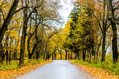 Yellow autumn forest trees and road.  Stock Photography