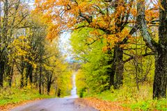 Yellow autumn forest trees and road.  Stock Images