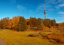 Yellow autumn forest with tv tower on horizon in sunny day Royalty Free Stock Images