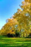 Yellow autumn garden Stock Photos