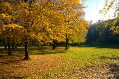 Yellow autumn garden Stock Image