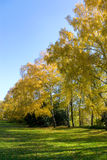 Yellow autumn garden Royalty Free Stock Photos