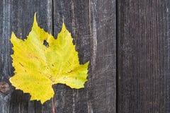Yellow autumn grape vine leaf Royalty Free Stock Photos