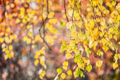Yellow autumn leaf Stock Photo