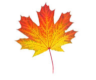 Free Yellow Autumn Leaf Royalty Free Stock Images - 35941509